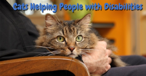 Cats-helping-people-with-disabilities-Title