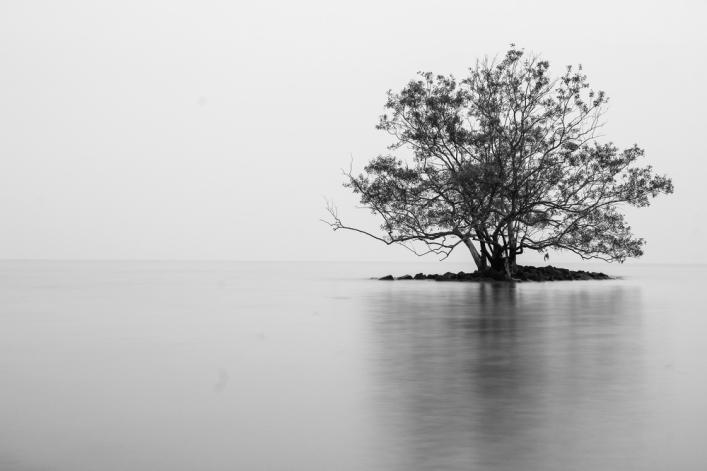 Lone-tree-on-an-island